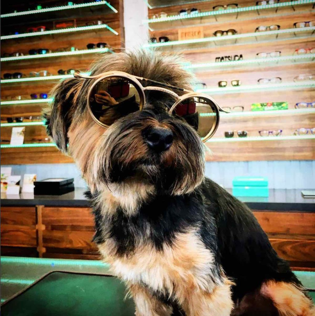 Eye Elegance Staff Member Cocoa in Sunglasses
